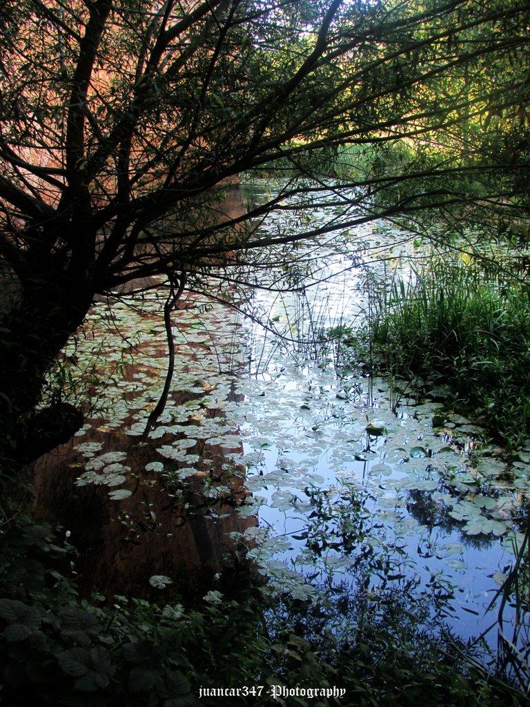Meandros del río Lobos con proliferación de flora acuática