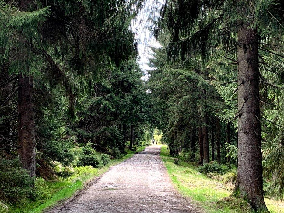 Szlak w Górach Izerskich
