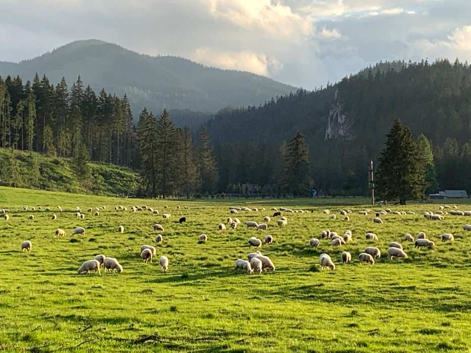 Siwa Polana (a meadow in the mountains)