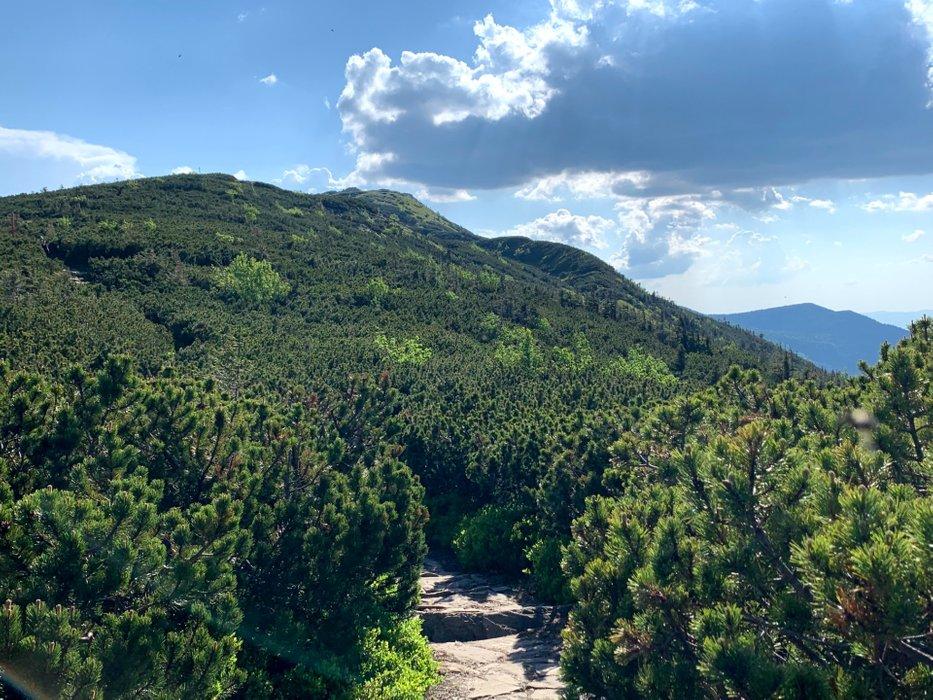Szlak na Babią Górę, okolice Kępy