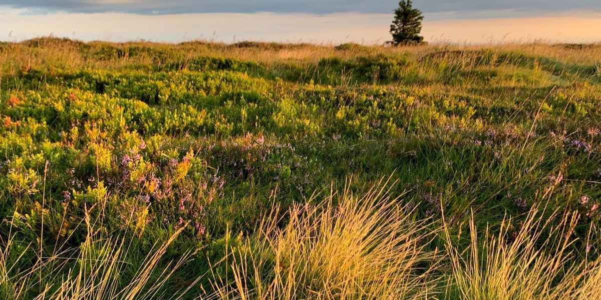 Korona wokół Kotliny Kłodzkiej: Cz.5 - Wschód słońca na Śnieżniku, torfowisko i czeskie śniadanie.