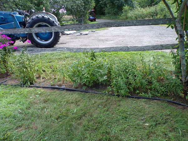 4th Fence  daylilies, daisy, white phlox, peony,white phlox, forsythia crop August 2020.jpg