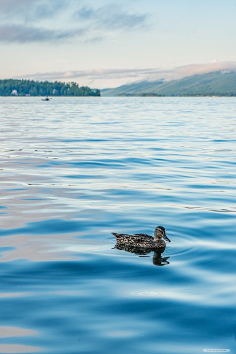 quack, quack!