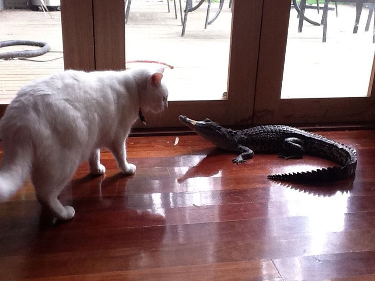 baby billy and a fearless cat.jpg