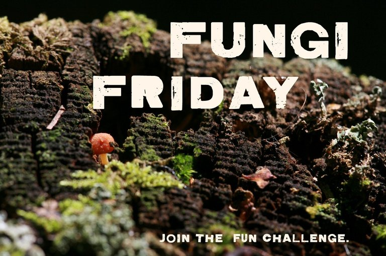 fungifriday.jpg