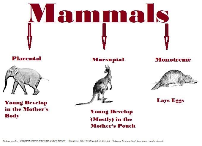 mammal chart.jpg