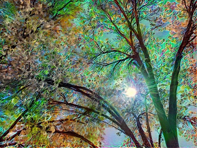 velv-trees.jpeg