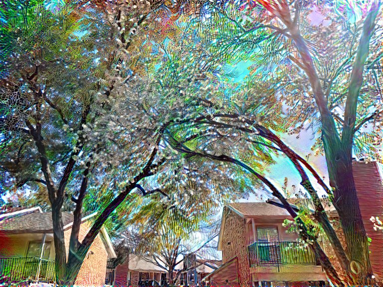 lush-trees.jpeg
