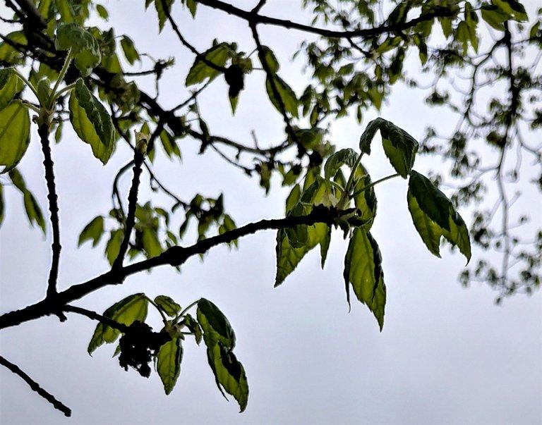 treetuesday5-4-2021-14ok.jpg