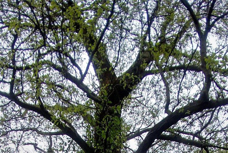 treetuesday5-4-2021-17ok.jpg