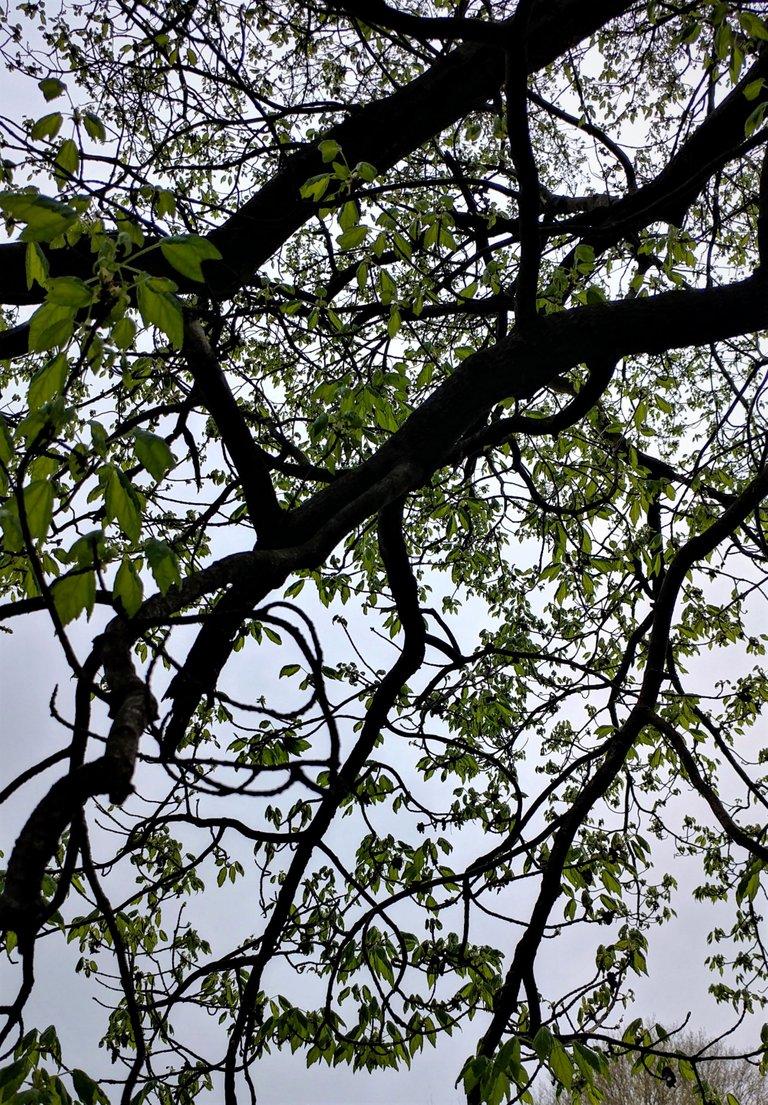 treetuesday5-4-2021-13ok.jpg