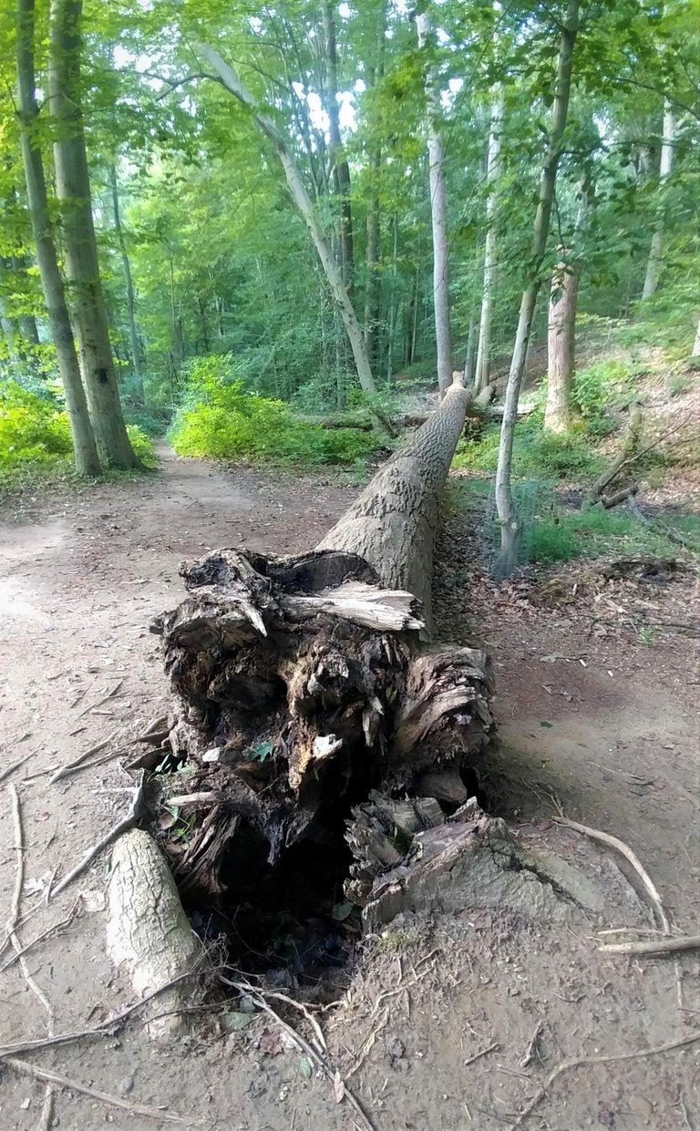 treetuesday5-11-2021-9ok.jpg