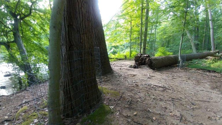 treetuesday5-11-2021-6ok.jpg