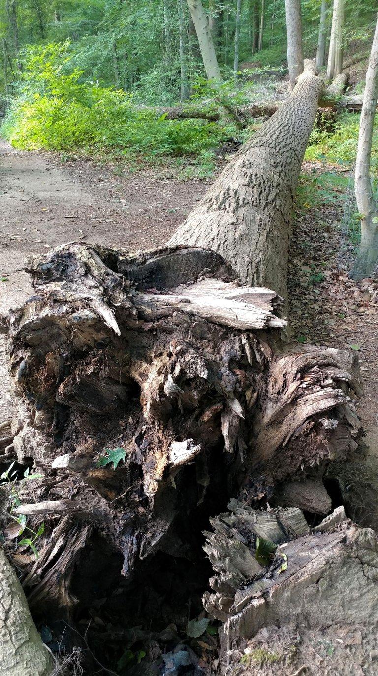 treetuesday5-11-2021-10ok.jpg