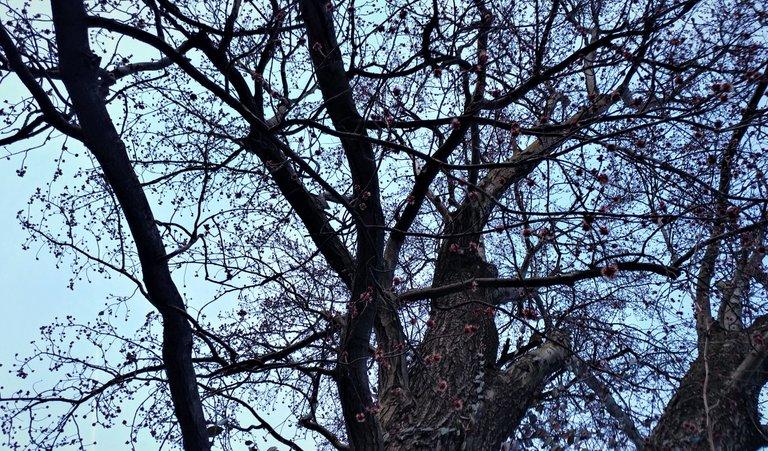treetuesday5-4-2021-12ok.jpg