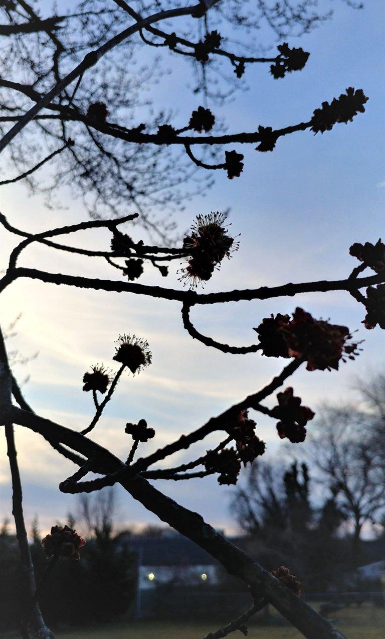 treetuesday5-4-2021-7ok.jpg