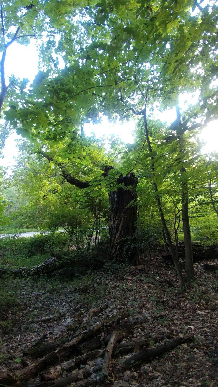 treetuesday5-11-2021-11ok.jpg