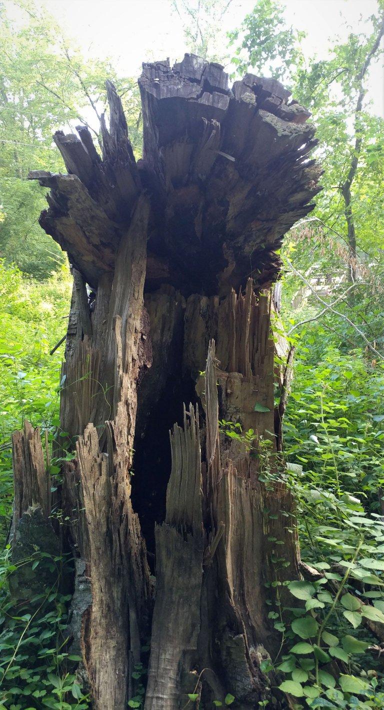 treetuesday5-11-2021-5ok.jpg