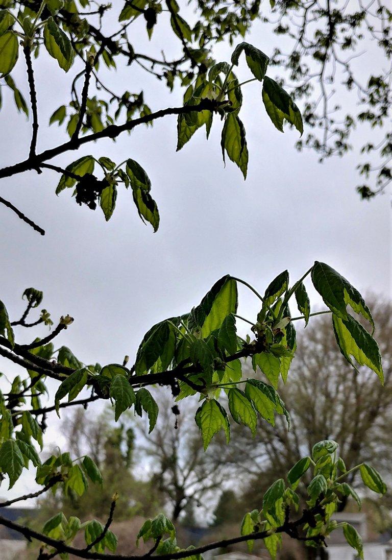 treetuesday5-4-2021-15ok.jpg
