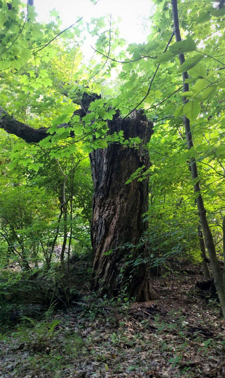 treetuesday5-11-2021-12ok.jpg