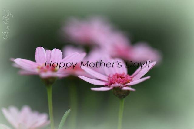 morning purple mothers day.jpg