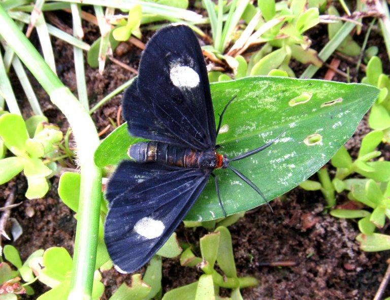 moth (2).JPG