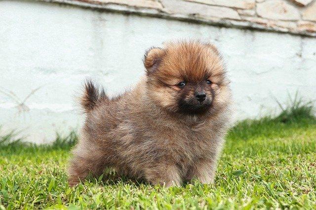 puppy-5506142_640.jpg