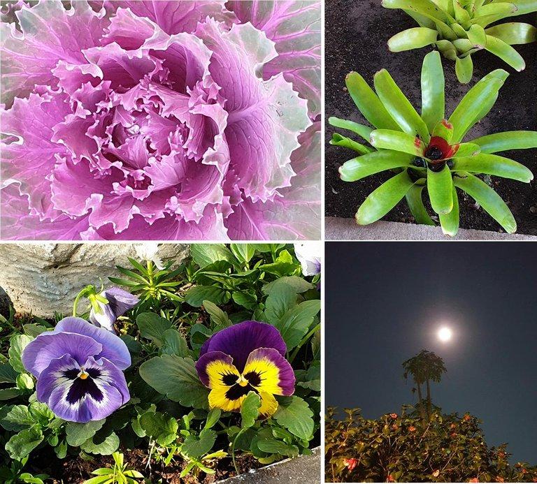 moon flowers.jpg