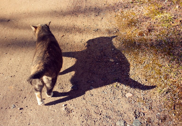 2021-cat-0074w.jpg