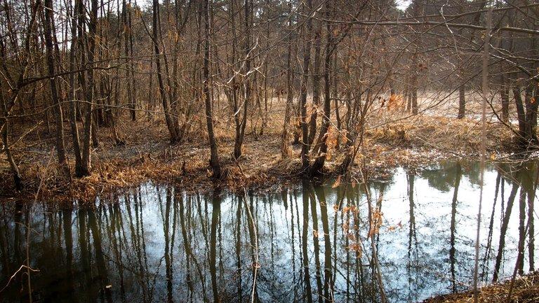 лісовий пейзаж 3.jpg