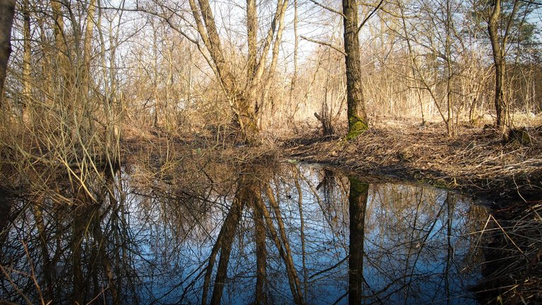 лісовий пейзаж 4.jpg