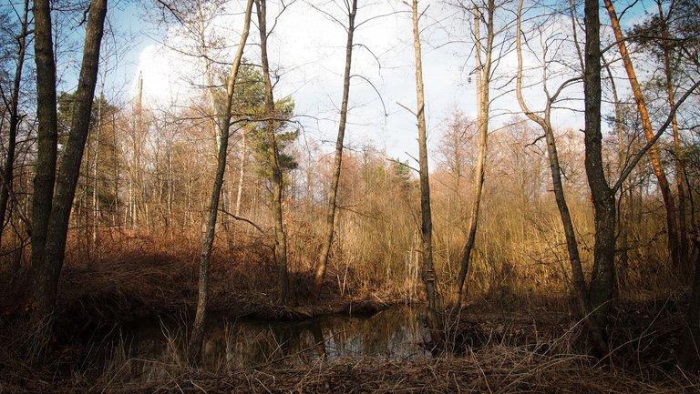 лісовий пейзаж 2.jpg