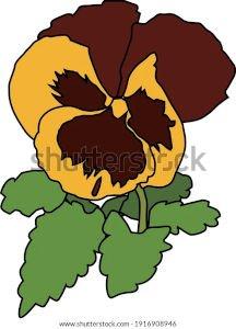 illustration_pansy_yellow_brown_flower_300w.jpg