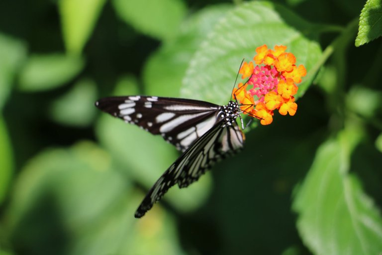 butterfly with flowers with leah d.jpg