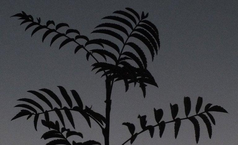 0775Silhouettes.jpg