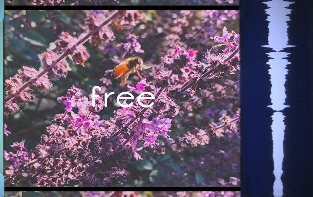 freehivethumb.jpg