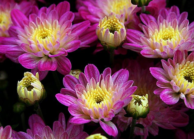 purple flowers 21.jpg