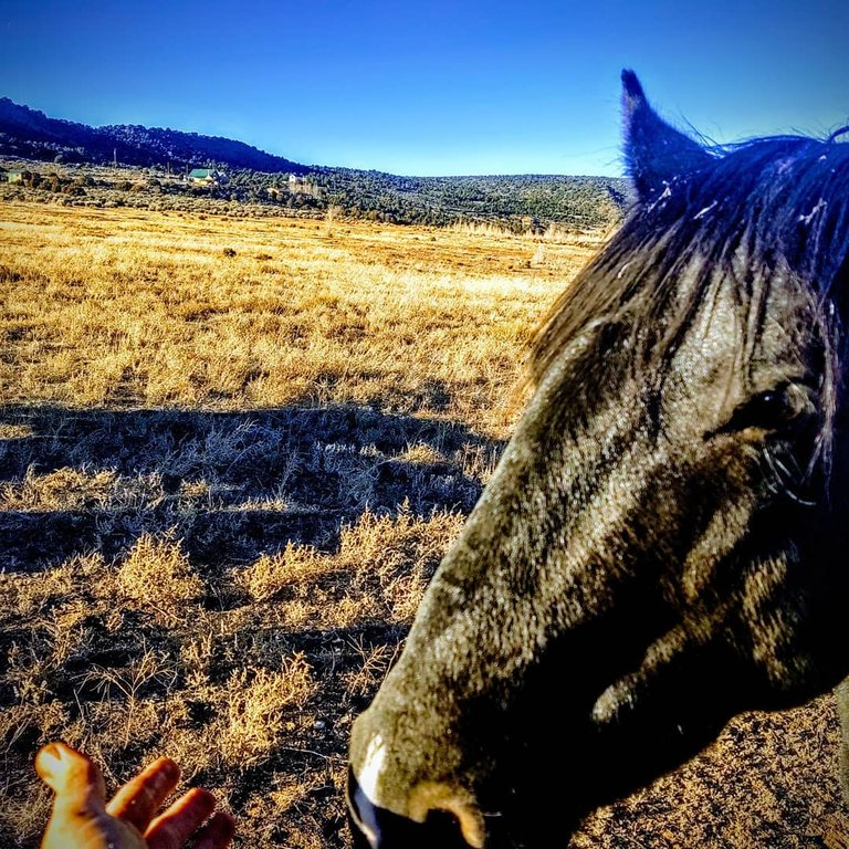 me petting a horse.jpg