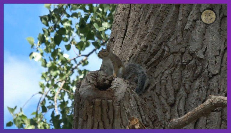 LakeThingSquirrel.JPG