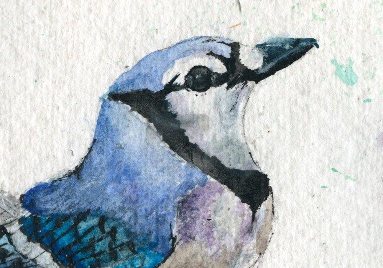 Blue Jay detail.jpg