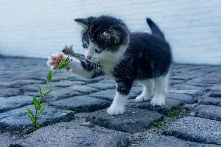 cat2536662_1920.jpg