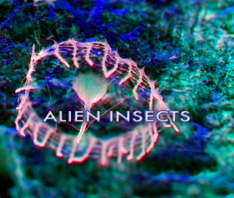 015_alieninsects.jpg