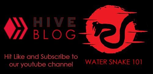 hive youtube.jpg