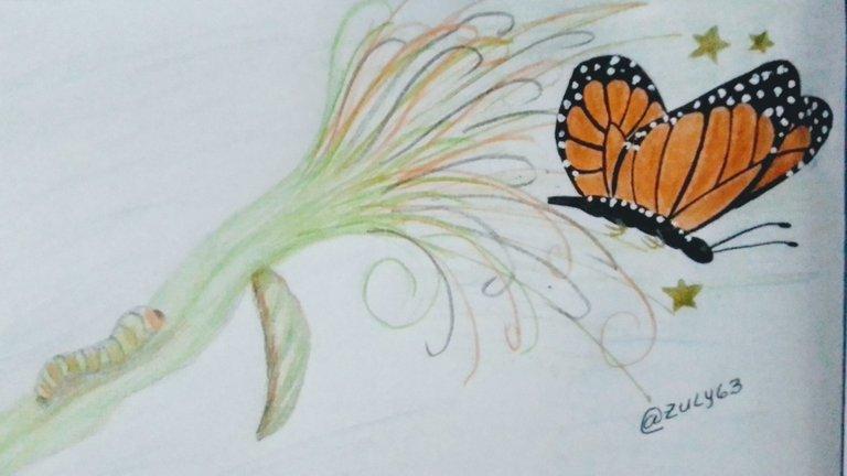Mi dibujo de la transformación de la mariposa