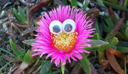 Flowers looking at me with Googlyeyes by @steemean
