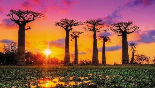 flora-fauna-madagascar-beautiful-baobab-trees-hero.jpg