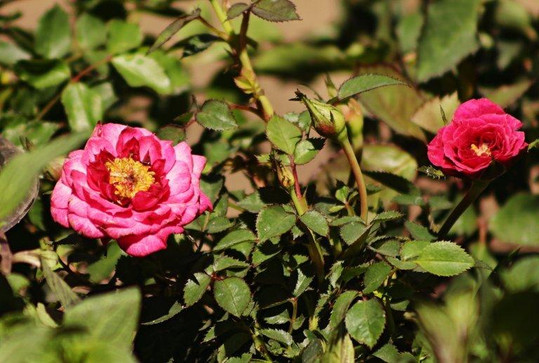 FloresHDR.JPG