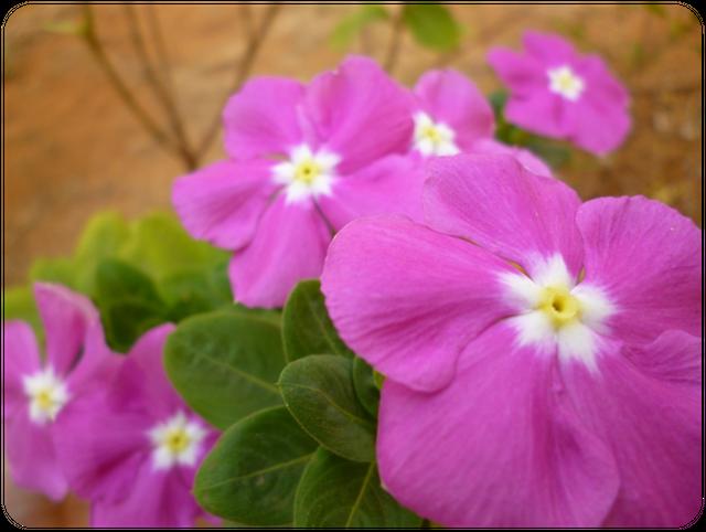 Flores007.png
