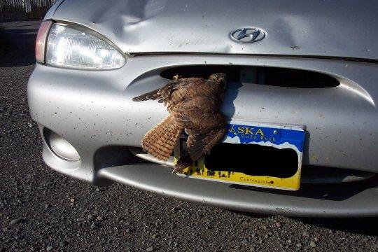 birdsplat.jpg
