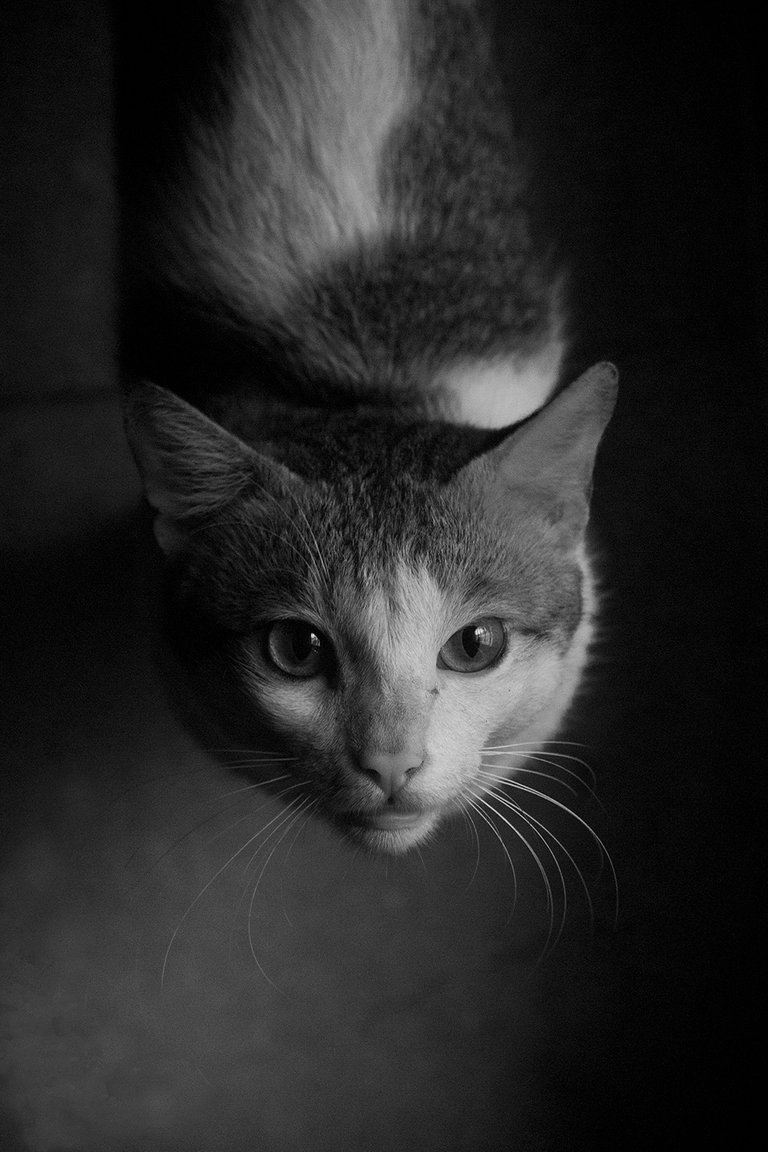 cat B&W.jpg